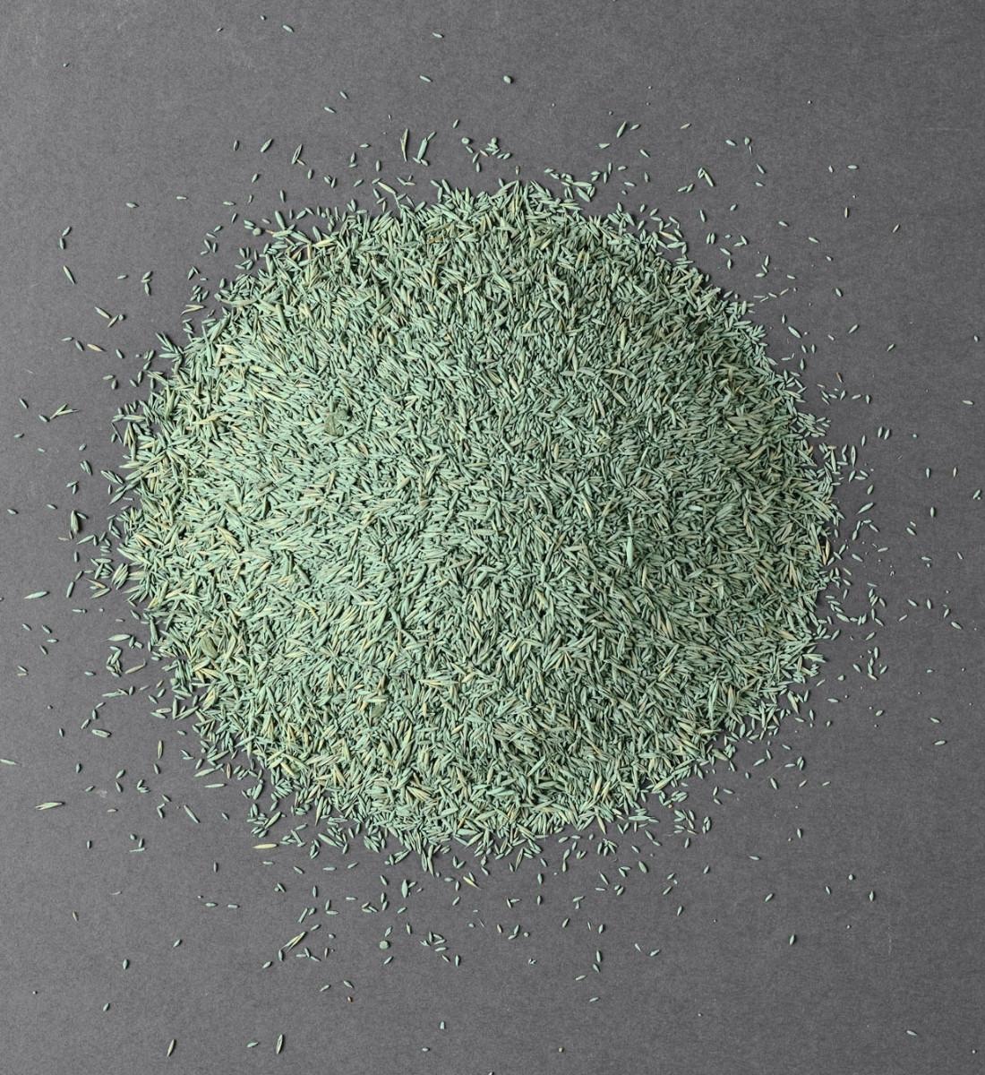 Gräsfrö Pro Svingel 100% 5kg