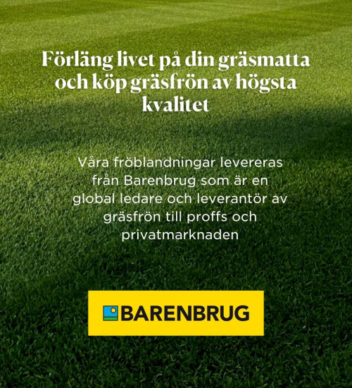 Gräsfrö Bar Intensive RPR rajgräs Barenbrug